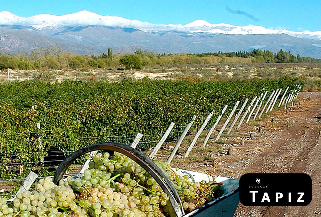 Bodega Tapiz vinos añejados en el mar de la patagonia en zona patagónica y producidos en Mendoza y Salta.