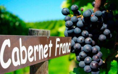Cabernet Franc, ¿el nuevo vino argentino de moda?